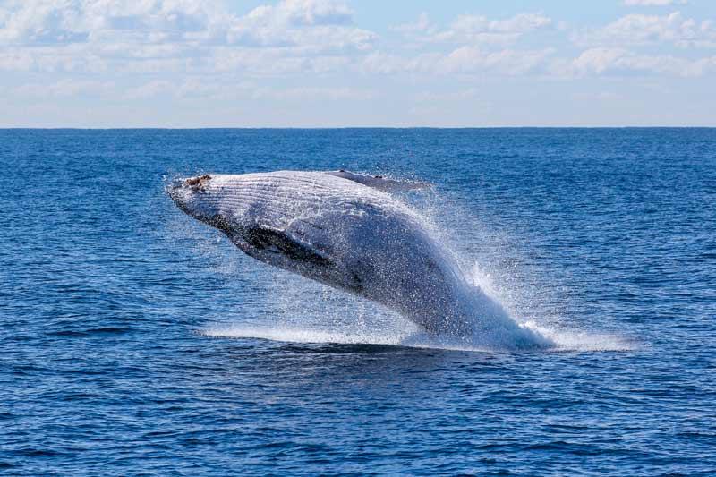 Localización de fauna marina