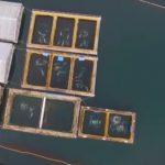 Dron descubre más de 100 ballenas cautivas en una bahía rusa